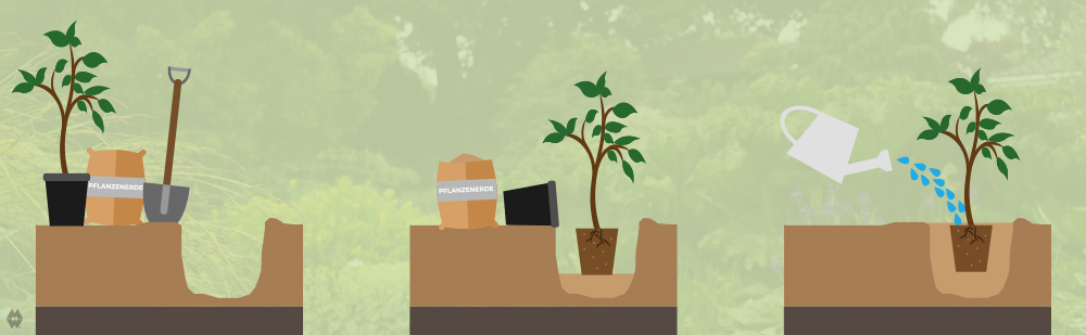 pflanzen-fuer-dich-pflanzanleitung-illustration