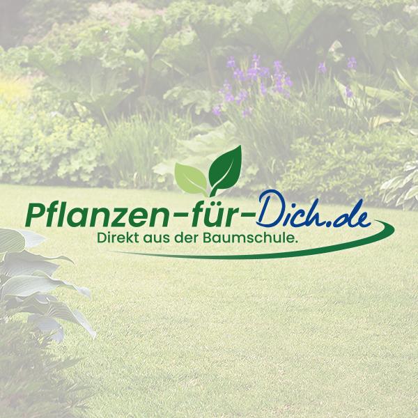 pflanzen-für-dich-teaser